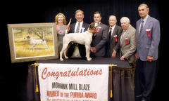 Purina Amateur Top Field Trial Bird Dog Award