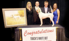 Purina Top Field Trial Bird Dog Award