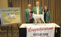 Top Shooting Dog Amateur Award