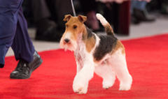 Purina Pro Plan-Fed Champions Shine at 2nd Annual Beverly Hills Dog Show