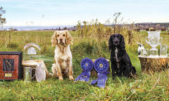 owner-sweeps-national-open-and-amateur-cocker-championships-with-cato-breeze