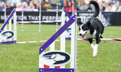 Purina Pro Plan Incredible Dog Challenge is All About Having Fun