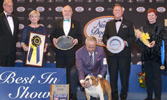 Bulldog Named 'Thor' Wins Best in Show at 2019 National Dog Show