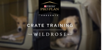 Puppy training videos crate training