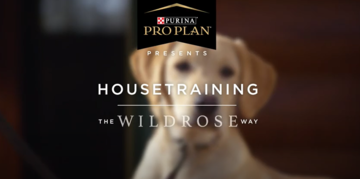 Puppy training videos house training