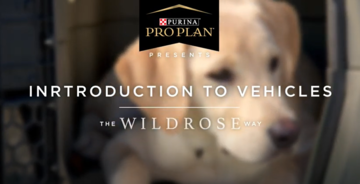 Puppy training videos intro to vehicles