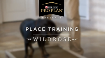 Puppy training video joint protection