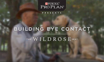 puppy-training-videos-building-eye-contact