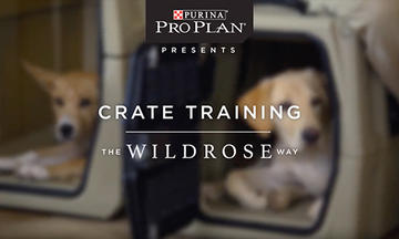 puppy-training-videos-crate-training