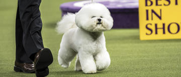 purina pro plan fed dogs sweep 2018 westminster kennel club dog show