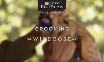 puppy-training-videos-grooming