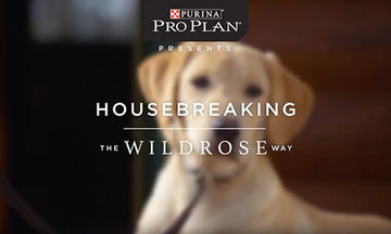 puppy-training-videos-housebreaking