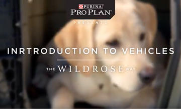 puppy-training-videos-intro-to-vehicles