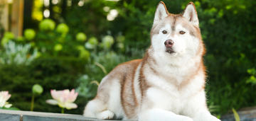 dog-spring-breed-update-2019-950x450
