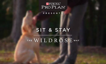 puppy-training-videos-sit-and-stay