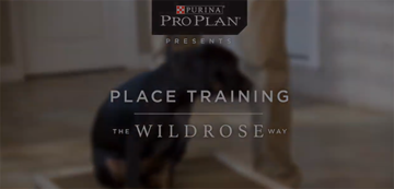 puppy-training-videos-place-training