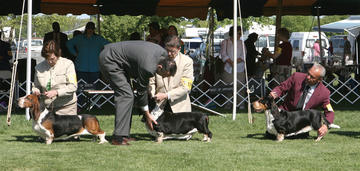 purina-pro-club-timing-dog-show